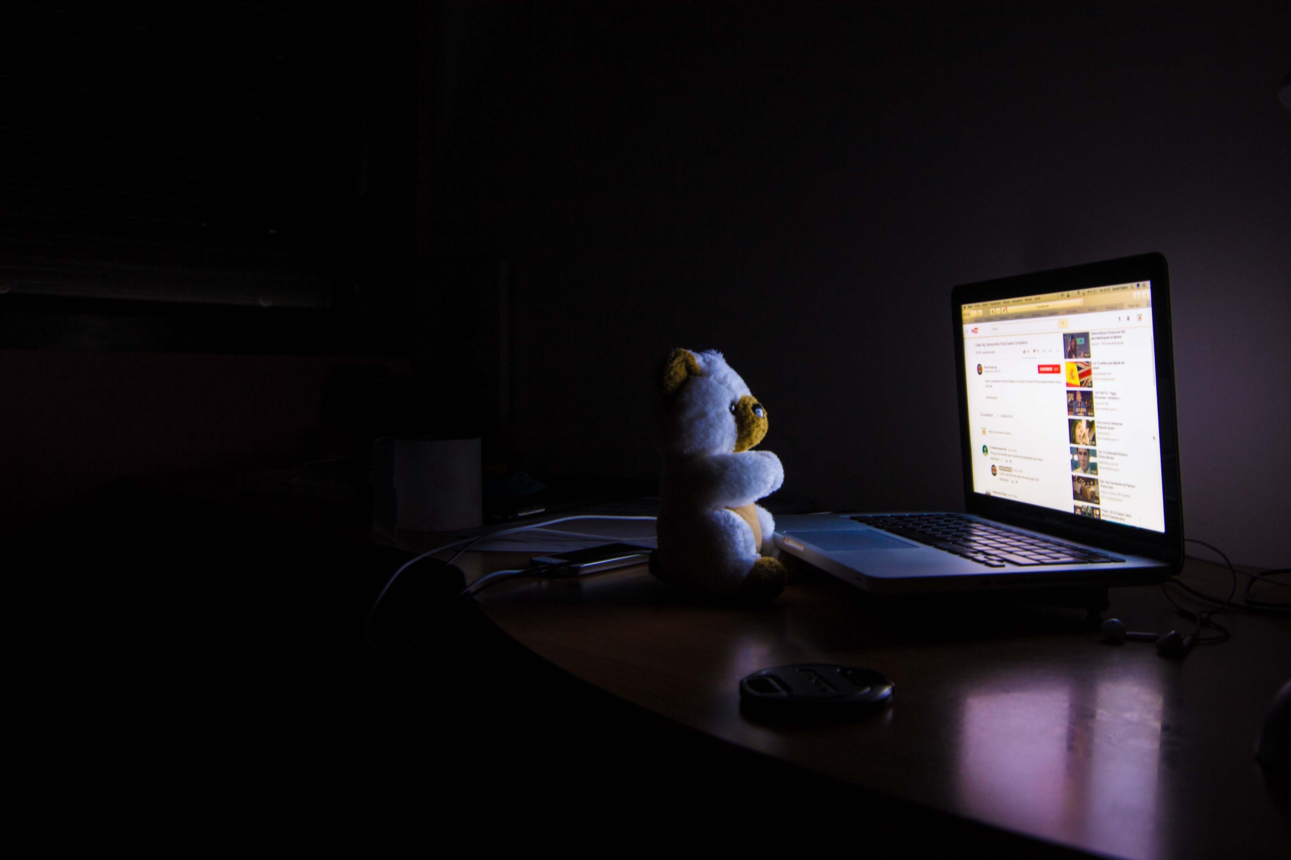 bear-business-computer-461497.jpg